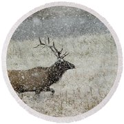 Bull Elk With Snow Round Beach Towel