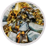 Bull Kelp On Blue Rocks Round Beach Towel