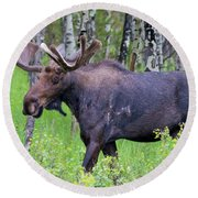 Bull Moose In The Wild Round Beach Towel