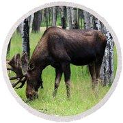 Bull Moose In The Woods  Round Beach Towel