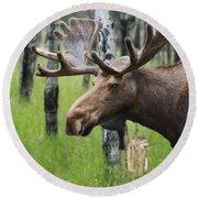 Bull Moose Portrait Round Beach Towel