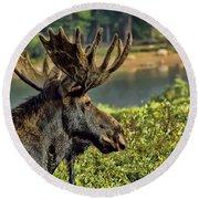 Bull Moose Round Beach Towel by Steven Parker