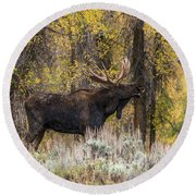 Round Beach Towel featuring the photograph Bull Moose Talk by Yeates Photography