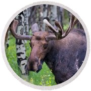 Bull Moose Up Close Round Beach Towel