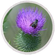 Bull Thistle And Leafcutter Bee Round Beach Towel