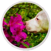 Bulldog Flowers Round Beach Towel
