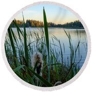 Bulrush And September Evening Round Beach Towel