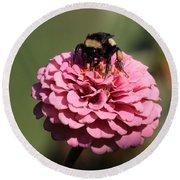 Bumble Bee On Zinnia 2649 Round Beach Towel