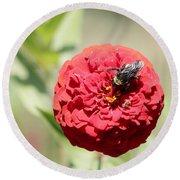Bumble Bee On Zinnia Round Beach Towel