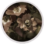 Bumblebee On Blush Country Rose In Sepia Tones Round Beach Towel