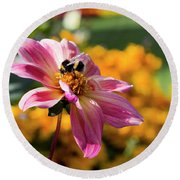 Round Beach Towel featuring the photograph Bumblebee On Orange by Helga Novelli