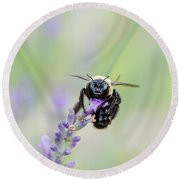 Round Beach Towel featuring the photograph Bumblebee On The Lavender Field by Andrea Anderegg