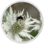 Bumblebee On Thistle Flower Round Beach Towel by Victoria Harrington