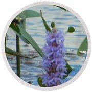 Bumblebee Pickerelweed Moth Round Beach Towel