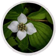 Round Beach Towel featuring the photograph Bunchberry Dogwood On Gloomy Day by Darcy Michaelchuk