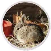 Bunny In The Garden Round Beach Towel