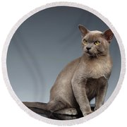 Burma Cat Sits And Loocking Up On Gray Round Beach Towel