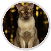 Burmese Cat Sits On New Year Background Round Beach Towel