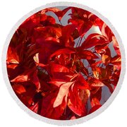 Burning Bush In Snow Enchantment Round Beach Towel by Anastasia Savage Ealy