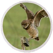 Burrowing Owl - Learning To Fly Round Beach Towel