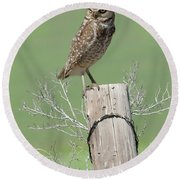 Burrowing Owl On Post Round Beach Towel