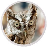 Burrowing Owl Portrait Round Beach Towel