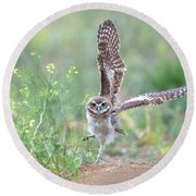 Burrowing Owl Spies Grasshopper Round Beach Towel