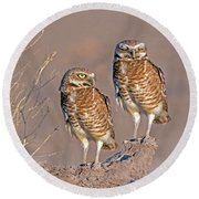 Burrowing Owls At Salton Sea Round Beach Towel