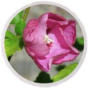 Peek-a-boo Aphrodite Rose-of-sharon Hibiscus Round Beach Towel