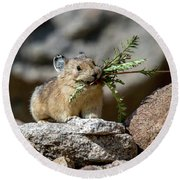 Busy As A Pika Round Beach Towel