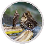 Round Beach Towel featuring the photograph Butterflies Eating Bananas by Raphael Lopez