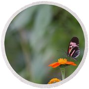 Butterfly 16 Round Beach Towel