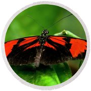 Butterfly #1955 Round Beach Towel