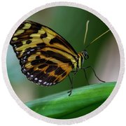 Butterfly #1963 Round Beach Towel