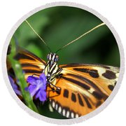 Butterfly 2 Eucides Isabella Round Beach Towel