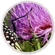 Butterfly On Bull Thistle Round Beach Towel