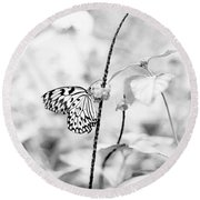Butterfly Eatting  Round Beach Towel