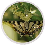 Round Beach Towel featuring the photograph Butterfly From Another Side by Susan Capuano