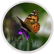 Round Beach Towel featuring the photograph Butterfly In Winter by Debby Pueschel
