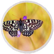 Butterfly On A Lupine Round Beach Towel