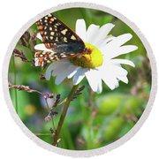 Butterfly On A Wild Daisy Round Beach Towel