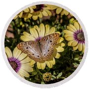 Butterfly On Blossoms Round Beach Towel