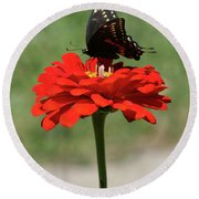 Butterfly On Red Zinnia Round Beach Towel
