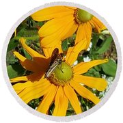 Round Beach Towel featuring the photograph Butterfly On Yellow Flower by Jasna Gopic