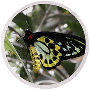 Butterfly One Round Beach Towel
