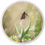 Round Beach Towel featuring the photograph Butterfly Paradise by Bill Wakeley