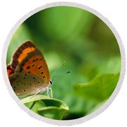 Butterfly Perching On A Leaf Round Beach Towel