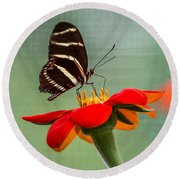 Butterfly Zebra Longwing On Zinnia Round Beach Towel