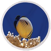 Butterflyfish And Corals Round Beach Towel