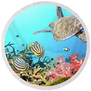 Butterflyfishes And Turtle Round Beach Towel